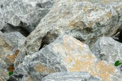 岩とヒヨドリ