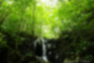 Yanbaru landscape.jpg