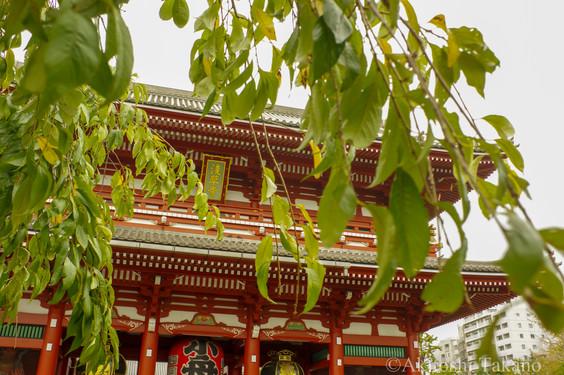 若草と浅草寺
