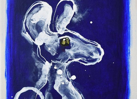 SC0114. Kangaroo On A Blue Background