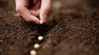 A semente