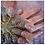 Thumbnail: Nail Art Application L1 Award VTCT