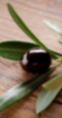 Black-Olive-Branch.jpg