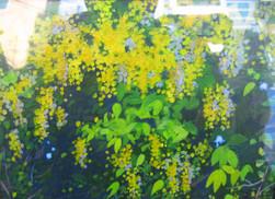 U Mya Thaung - Padaung Flowers