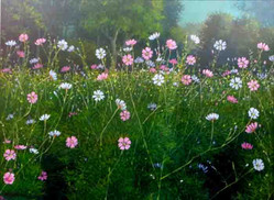 Mg Mg Aung - Flower Field
