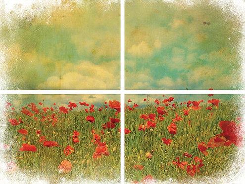 Field of Flowers Transfer
