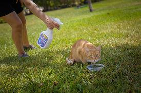 gato pulga 3.jpg