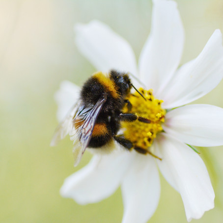 We Are BUZZING For Bee Pollen