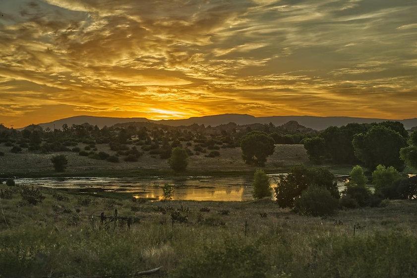 willow sunrise.JPG