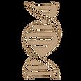 ADN2.png