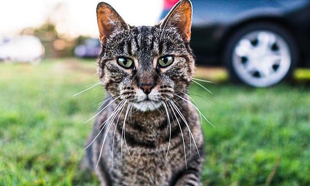 Just a cat I met.