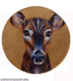 Chantall's Spirit Deer Drum