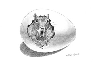 Another Surprised Squirrel in an Egg