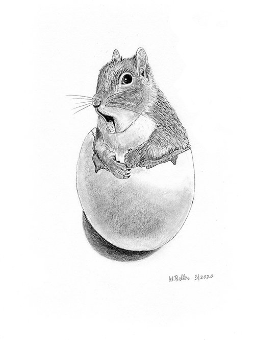 Squirrel in an Egg: Prints