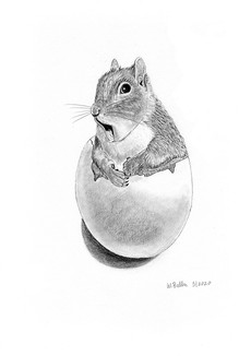Surprised Squirrel in an Egg