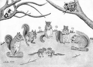 5 Pregnant Squirrels: Family Fun