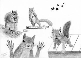 Back Door Squirrels