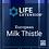 Thumbnail: European Milk Thistle