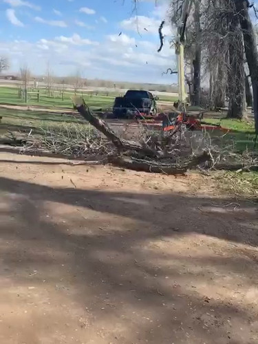In Progress Tree Removal