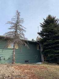 Before - Single Tree Removal