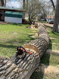 Tree Removal & Clean Up