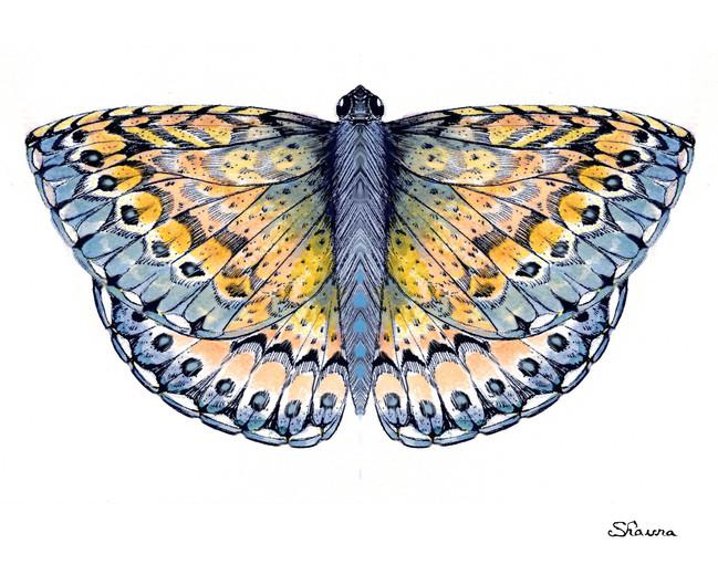 Butterfly 01.8x10%22.jpg