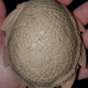 Oversized Dragonet Egg