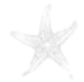 Starfish PNG Inverted copy.png