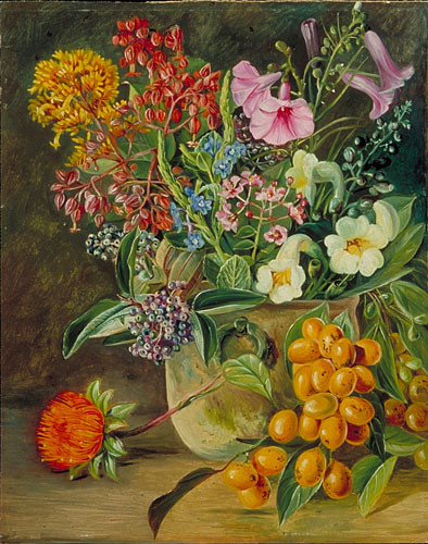 Group of Brazilian Forest Wild Flowers and Berries Marianne North Gallery