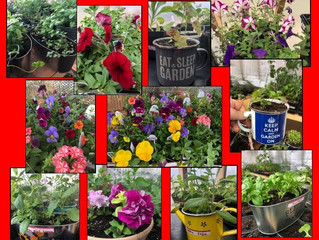 Spring Greenhouse Sale!!!