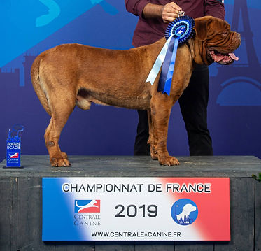 Championnat de france.jpg