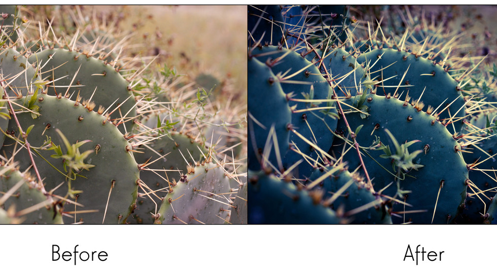 Cactus Before After
