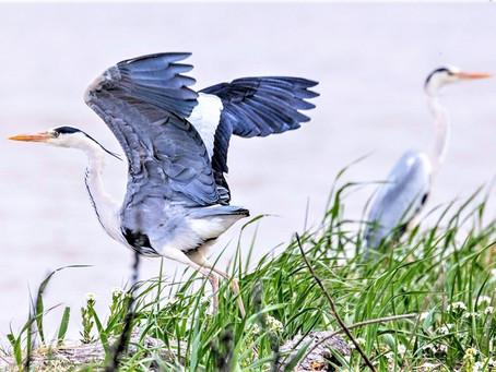 Wild Birds in Ishikari