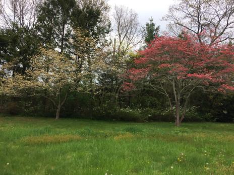 Spring-Bloom-CasbaFilms.JPG