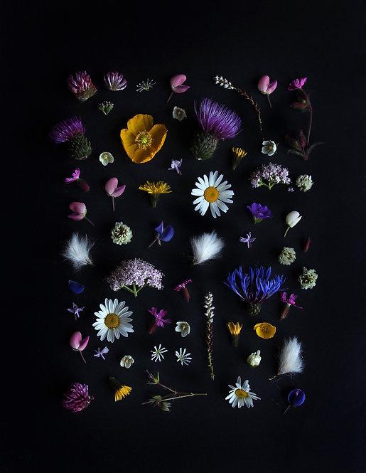 Nordic Medow / Nordisk Blomstereng