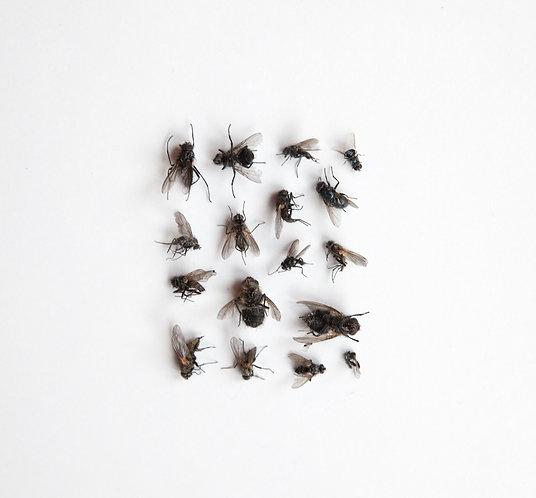 Flies / Fluer