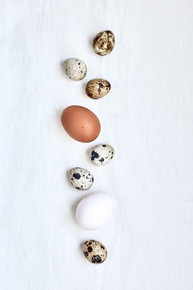 Personal   Food styling   Food Photography   series   eggs   still l