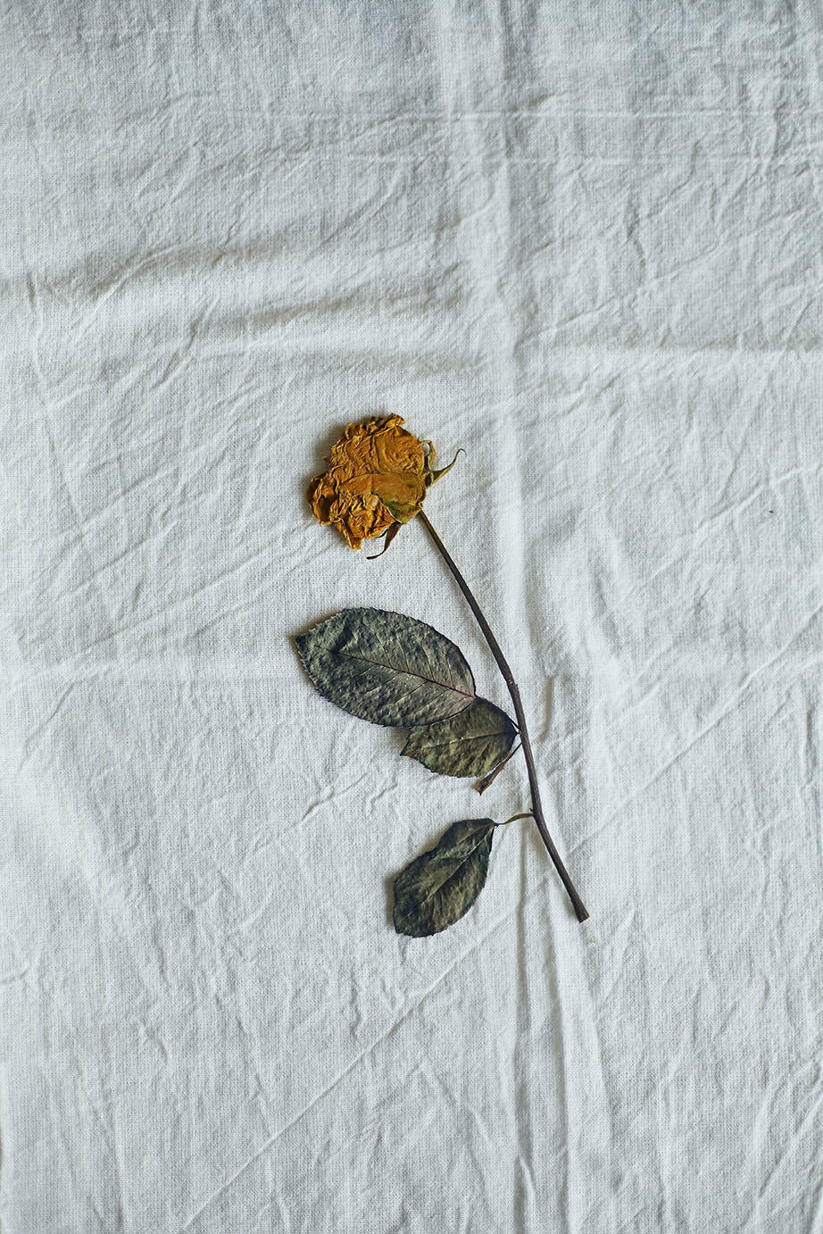 dry flower kept on a table