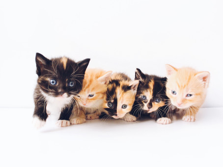 Penyebab Induk Kucing Tidak Mau Menyusui dan Cara Mengatasinya