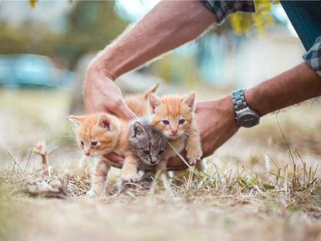 7 Cara Merawat Kucing Baru Adopsi Supaya Tidak Stress dan Cepat Akrab