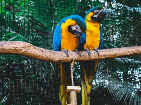 Keistimewaan Burung sebagai Hewan Peliharaan