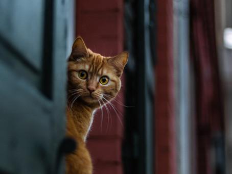 Jangan Sembarangan Usir! Inilah Cara Mengusir Kucing Tanpa Menyakitinya!