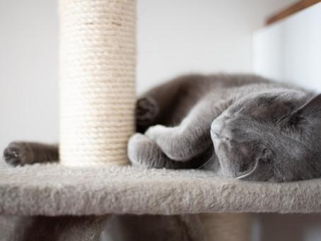 Pentingnya Scratching Post untuk Kucing