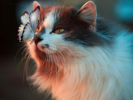 Sukar Dipercaya, Inilah Fakta Unik Kucing Yang Tidak Banyak Diketahui!