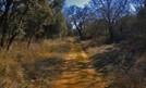 Mes a mes: Las plantas de nuestras zonas verdes de Palencia