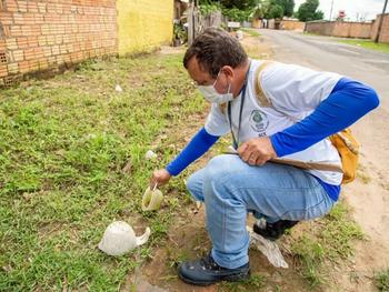 Grande risco de transmissão de dengue, zika e chikungunya em Boa Vista.