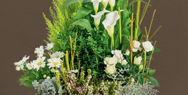 Coupe de Plante