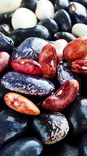 seleccion optica de frejoles peru.png