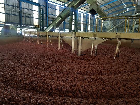 Pre secado de cacao