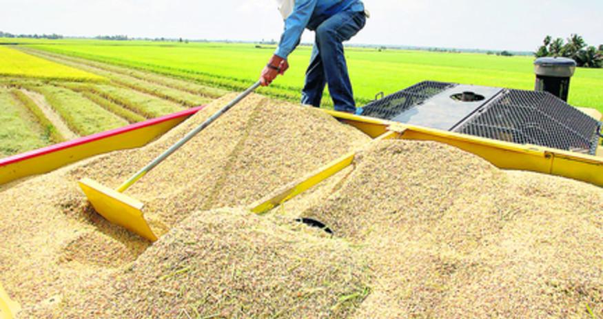 procesamiento de arroz.jpg